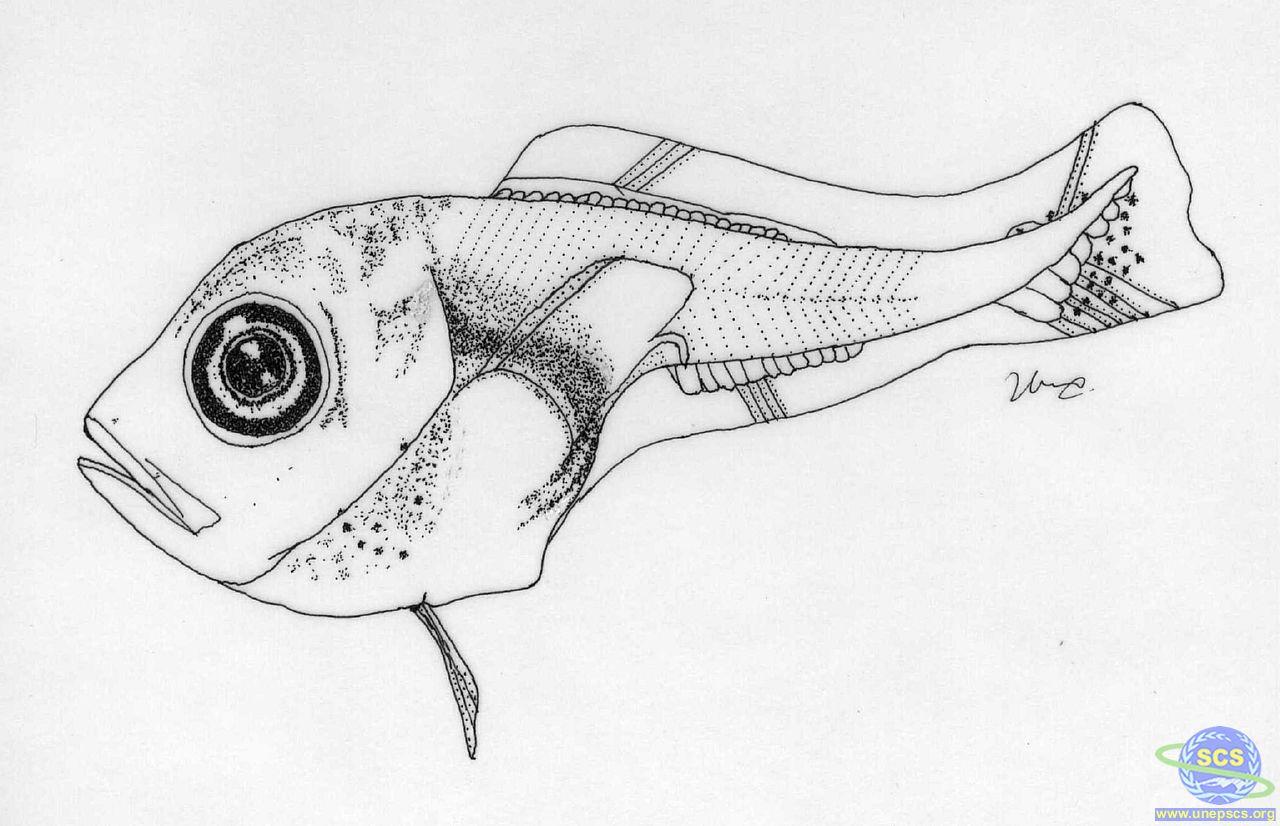 Advanced Larval Fish Training Workshop