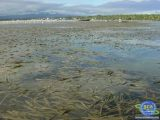 Management Models for Coral Reef and Seagrass Ecosystems