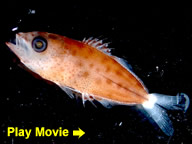 Larval Fish Identification Course