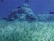 Seagrass in China