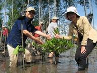 Regional Training Workshop on Mangroves