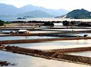 Shrimp-Vietnam