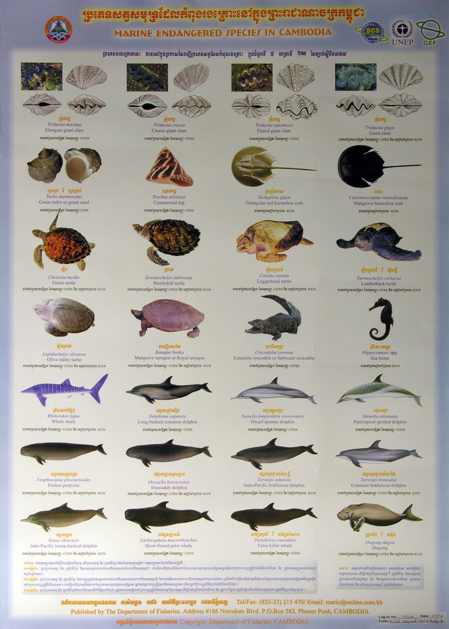 South china sea project south china sea online public for Endangered fish species