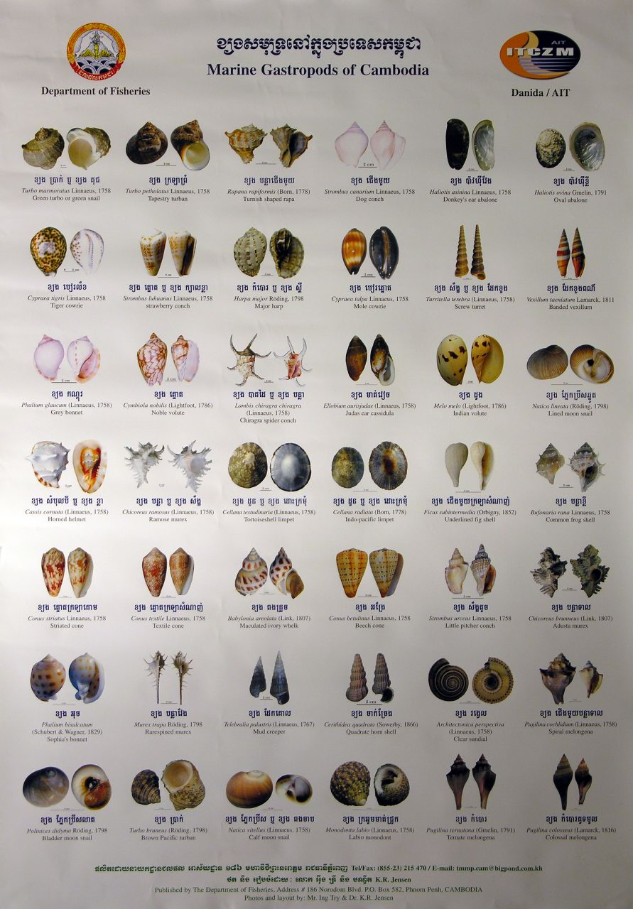 articles on gastropods