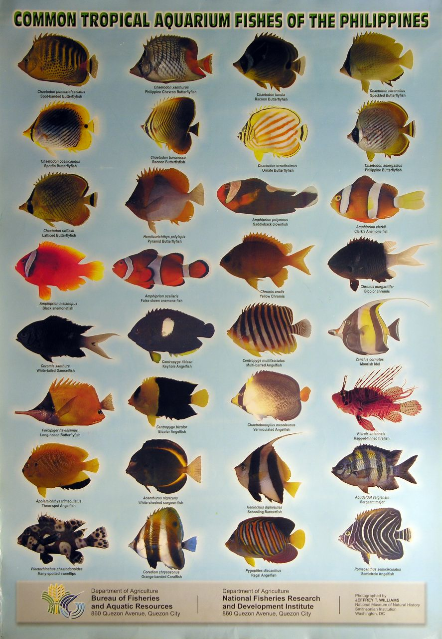 http://www.unepscs.org/images/posters/Tropical_Aquarium_Fish_of_the_Philippines.jpg